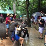 elephantcamp2