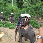 elephantcamp3
